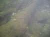 CIMG9966-20130624-085737
